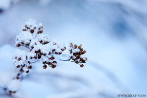First snow - I by crelight