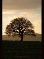 Lone Tree II by GMCPhotographics