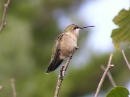 baby-hummer by Nipntuck3