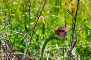 Lone Butterfly 9-13 crop-359 by MariaWillhelm