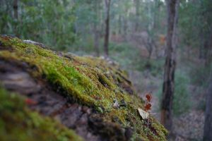 Log with moss by AndrewMcluckie