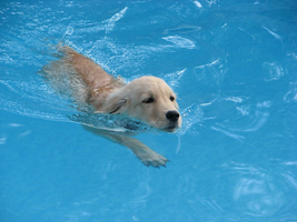 Swimming Puppy by Piepaws