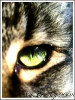 The Eye Of The Tiger by natashaaa