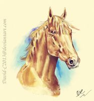 Horse - Digital Watercolour by David-c2011