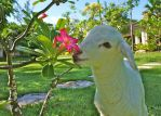 Baby Bella smelling the flowers by PatriciaVazquez