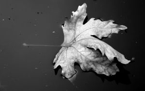 LeaF by DanaeVelvet