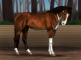 CSS's Lead Mare by CollidingStarsStable