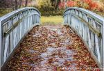 Autumn Bridges by AnnoyedGirl