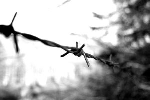 barbed wire by simafi