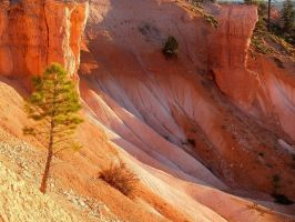 Bryce Canyon 2 by NB-Photo