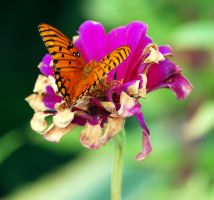Fritillary Lunch by jennalynnrichards
