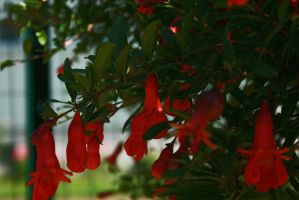 red bells by nevercrazy