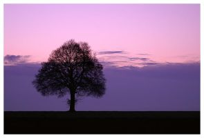 Lonely Tree by LLr0cks