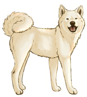 the japanese akita by julysky