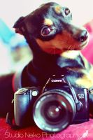Canon Dog by Doroty86