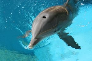 Dolphin Stock 1 by GloomWriter