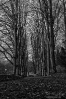 The path between the trees by debahi