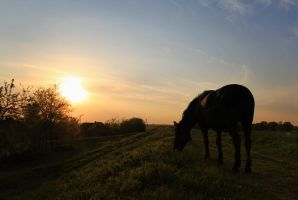 Horse eating at sunset by colorful-child
