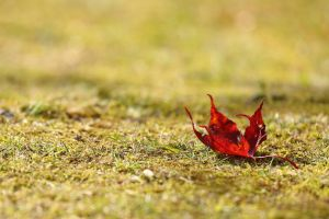 the last leaf by mkuegler