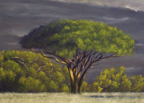 Tree by mp2015