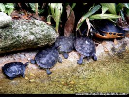 Turtle Family by Toxic-Muffins-Studio