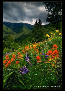 Hells Canyon Wildflowers by narmansk8