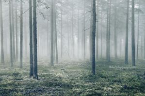 Mist-ical Forest by Stridsberg
