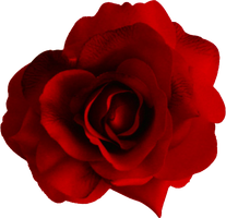 rose PNG655 by AudraMBlackburnsArt