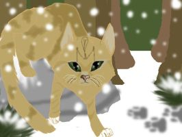 My Cat in the Snow! by S1LKST3RK4T