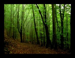 Forest by hamti