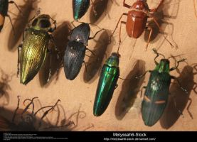 Assorted Insects Stock 5 by Melyssah6-Stock