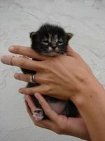 Baby Cat 04 by FantasyStock
