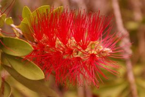 Red flower by JUET