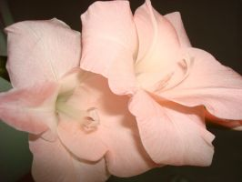 Flor1 by IloveMuffin-Stock