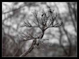 Winter 1 by 99-in-the-shade