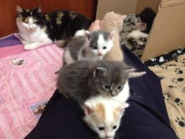Foster Kittens 4 Weeks Old by RakshaWw