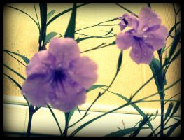 little purple flowers by x--photographygirl