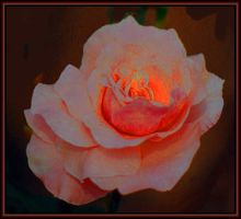 Fire Rose by Tailgun2009