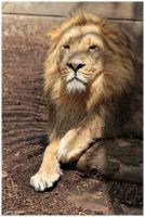 Dutch Pride the Lion by Claudia008