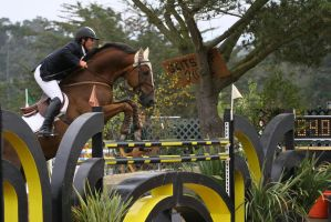 Liver Chestnut Warmblood Show Jumping Pebble Beach by HorseStockPhotos