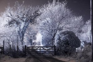Winter Scene IR CP Image by Okavanga