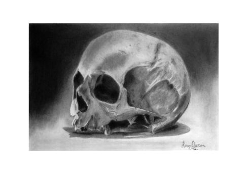 Skull study drawing III by KarinClaessonArt
