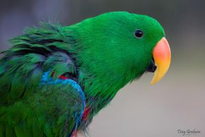 The neighbors parrot by droy333