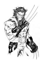 Wolverine - Japan Tours Festival feb 2015 by SpiderGuile