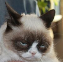 Grumpy cat by chriscoven