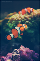 :Home in the reef: by LittleGeeky