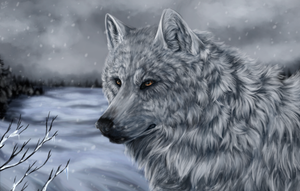 White Wolf of Icicle Creek + video by Anerris