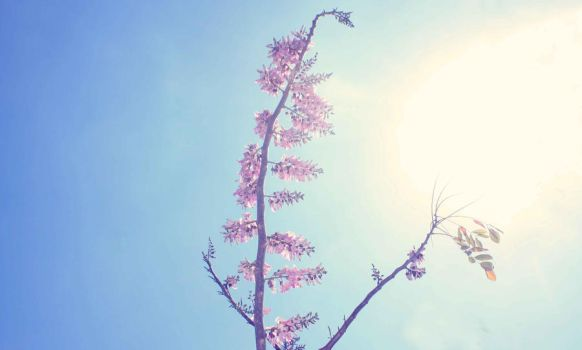 A Flower and The Sun by Hastosa