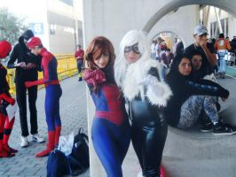 Spidergirl and Black cat by DrHarleyQuinnPsyco