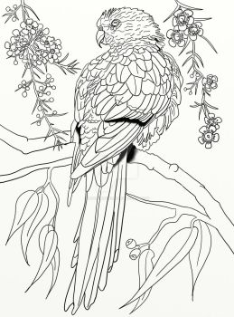 basaktinli 10 3 australian parrot coloring page pg 3 by lorrainekelly